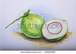 drawing fruit colour pencil watermelon stock illustration