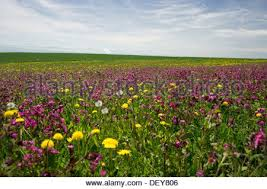 Flowers Near Me - meadow with spring flowers near hoechenschwand swiss alps at