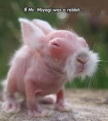 Mr Miyagi Meme - miyagi bunny animals know your meme