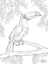 toco toucan super coloring color tocan pinterest toco toucan