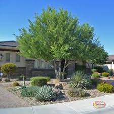 arizona ash for sale fast growing desert trees moon valley