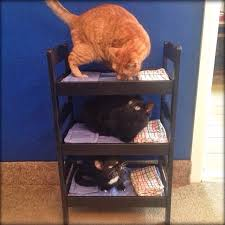 Cat Bunk Bed I Built Bunk Beds For My Cats A Few Months Ago Aww