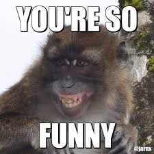 Monkey Face Meme - 15 hilarious monkey memes to brighten your day i can has