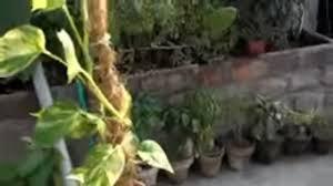 how to make coir stick coco coir for money plant coir stick