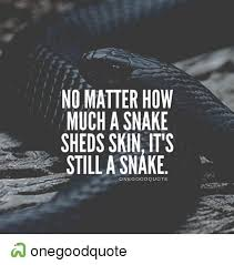 no matter how much a snake sheds skin it s still a snake one