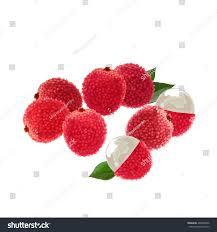 lychee fruit lychee lychee vector illustration lychee fruit stock vector