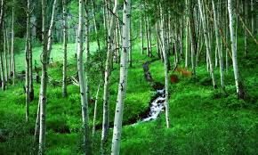 Colorado forest images White river national forest colorado alltrips jpg