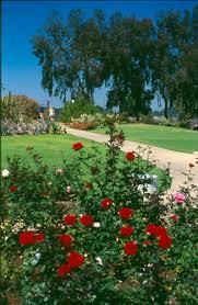 balboa park rose garden needs volunteers november 15 2016 kpbs