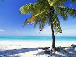 palm tree white and indian jambiani island of