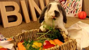 rabbit party party for a rabbit 5th birthday say happy birthday