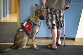 what is a service or assistance dog