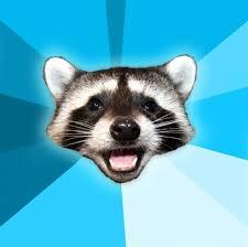 Raccoon Meme - lame pun coon know your meme