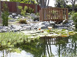 pond kits by pondmaster pondpals com