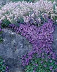 Rock Gardens Images by By Valleybrook Gardens North America U0027s Leading Horticultural