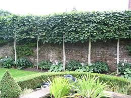 Ideas To Create Privacy In Backyard The 25 Best Hedges Ideas On Pinterest Garden Hedges Hedges