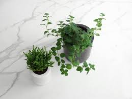 small planter small round concrete planter by conpot really well made