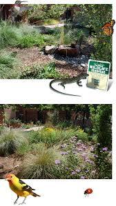 native plants albuquerque our habitat garden
