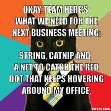 Business Meeting Meme - 100 best business cat images on pinterest cat memes funny cat