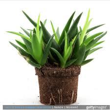 plantes dans la chambre des plantes dans la chambre une bonne idée enfant magazine