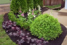 Bushes For Landscaping Best Types Of Shrubs For Landscaping Designs Photos