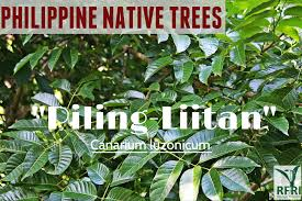 planting native trees the return of philippine native trees u2013 page 4 u2013 both public and