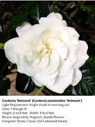 Gardenias by Gardenia Garden Gate Nursery Gainesville Fl