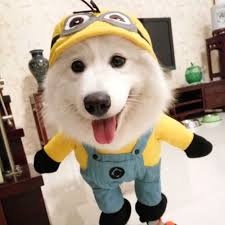aliexpress com buy funny halloween pet cat dog minions costume