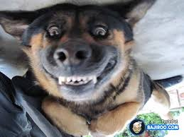 Funny Smile Meme - 17 funny smiling dogs funny pets bajiroo com