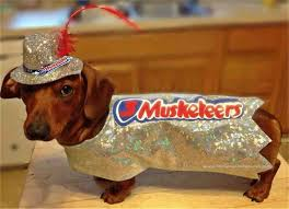 Halloween Costumes Miniature Dachshunds 314 Dachshund Fall Holidays Images Fall