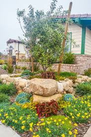 pizzo native plant nursery 127 best low water garden design images on pinterest landscaping