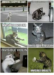 Invisible Cat Meme - how to confuse a cat newsflare what is this invisible contraption