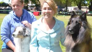 belgian shepherd townsville pampered pooches on show central western daily
