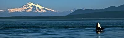 Washington Wildlife Tours images San juan island whale wildlife watching san juan islands jpg
