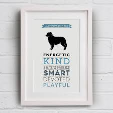 characteristics of a australian shepherd australian shepherd dog breed traits print by well bred design