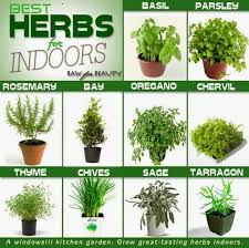 indoor kitchen garden ideas diy indoor herb garden ideas our motivations design