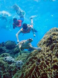 jeep snorkel underwater cozumel reef snorkel the second largest barrier reef in the world