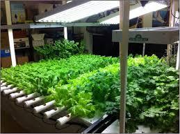 lettuce bed for indoor garden in winter 2802 hostelgarden net