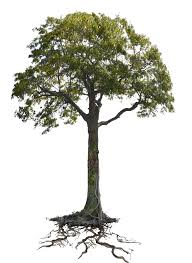 tree n roots png stock lake 1077 cc2 copy 3 by annamae22 on deviantart