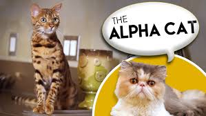 Barn Cat Names How To Name Your Alpha Cat Youtube