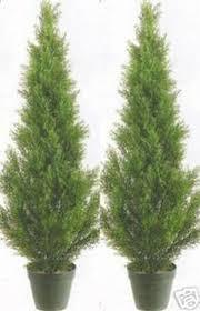 2 artificial 3 cedar topiary tree outdoor uv plant 36 cypress pine