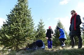 a family u0027s search for the u0027perfect tree u0027 at elizabeth farms