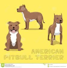 american pitbull terrier merchandise dog american pitbull terrier cartoon vector illustration stock