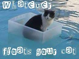 Cat Meme Boat - boat is not safe kitticus caticus pinterest boating cat and
