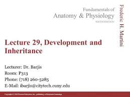 Cuny Anatomy And Physiology Anatomy And Physiology Pregnancy Growth And Development Ppt