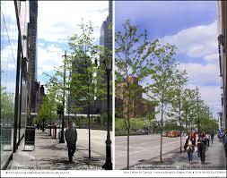 Define Tree 9a Ny City Street Canopy Shade Tree Landscape Urban Highway Median