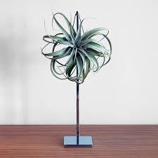 aerophyte diva statue lush modern touch of modern