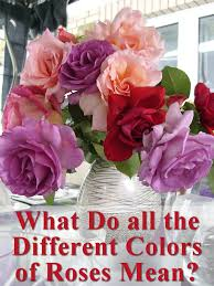 all the different colors of roses and their meanings hubpages