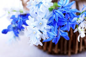 white and blue flowers blue and white winter wedding flowers1 blue winter wedding