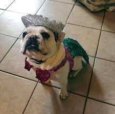 target halloween dog costumes mermaid dog costume set teal boots u0026 barkley target
