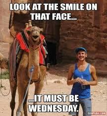 Hump Day Camel Meme - 30 best hump day images on pinterest funny images camels